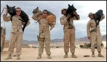 United States War Dog Association