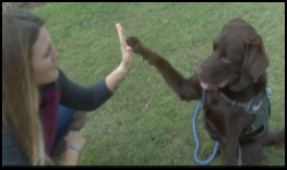 Army vet Lisa Mccombs, of Gulfort, Miss., and her service dog Jake. (Screenshot credit, WLOX-TV)